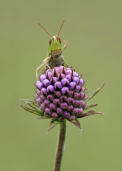 The Confused Grasshopper